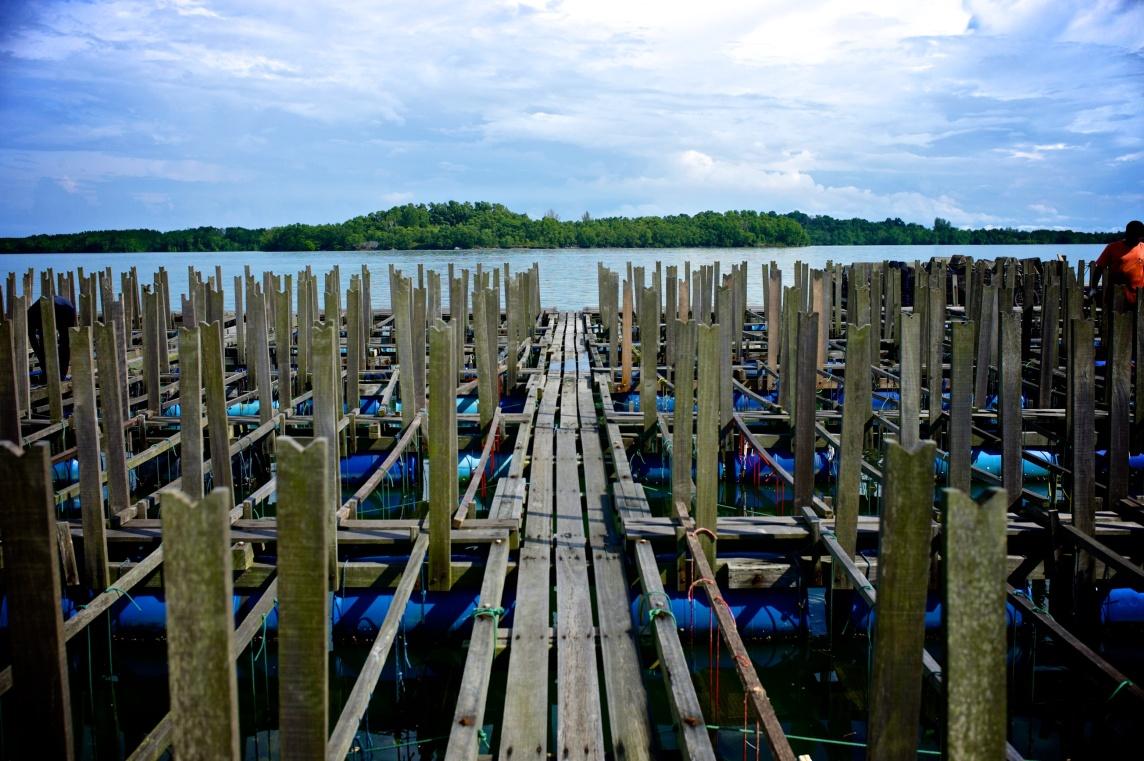 Hai Loong Marineculture 07