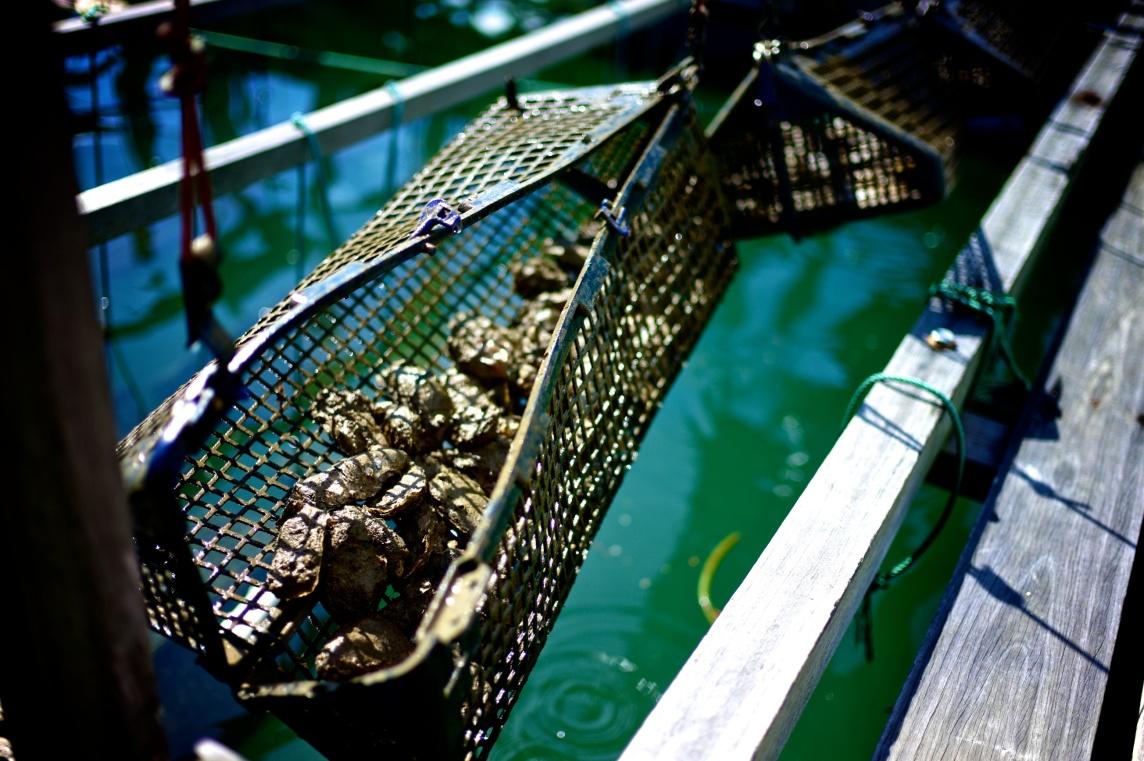 Hai Loong Marineculture 08
