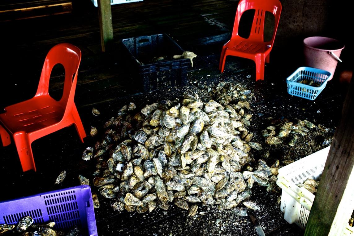 Hai Loong Marineculture 09