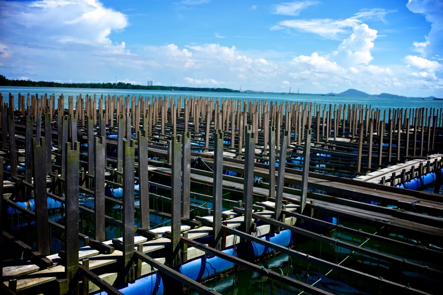 Hai Loong Marineculture 12