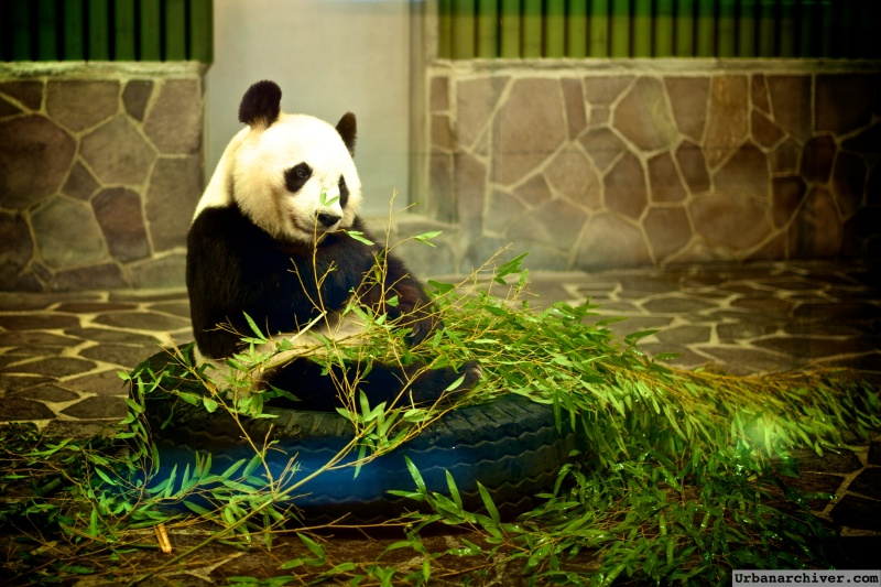 Kobe Oji Zoo 23