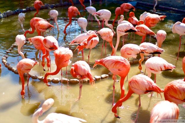 Kobe Oji Zoo 24
